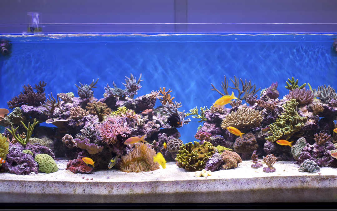 Outsourcing Aquarium Maintenance