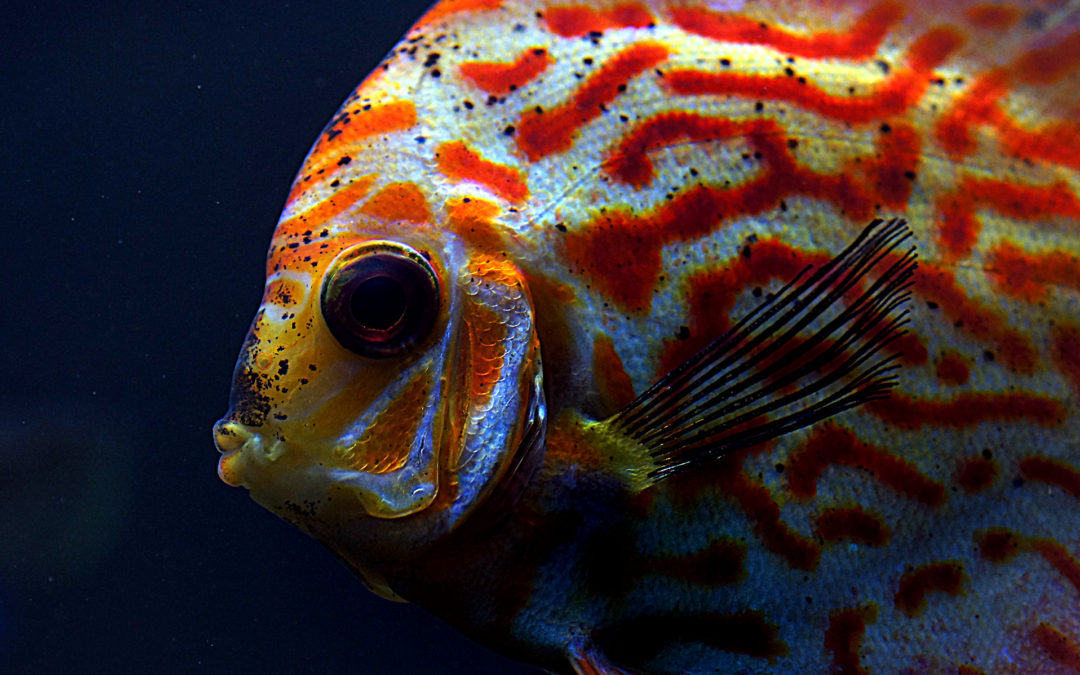 Is it Cruel to House Fish in an Aquarium?